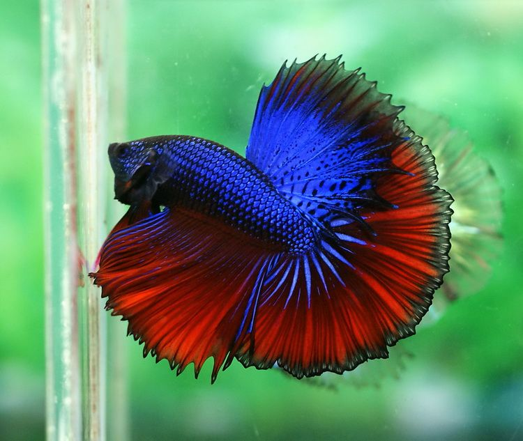 coolest freshwater aquarium fish