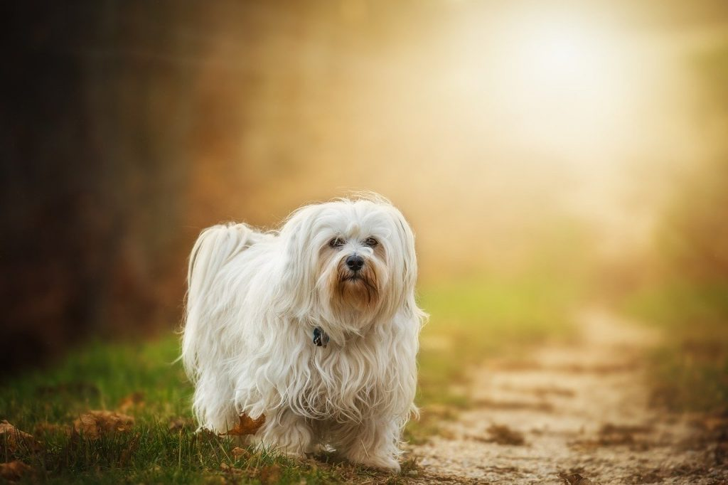 best dogs for kids and allergies