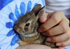 best pet rabbit for child