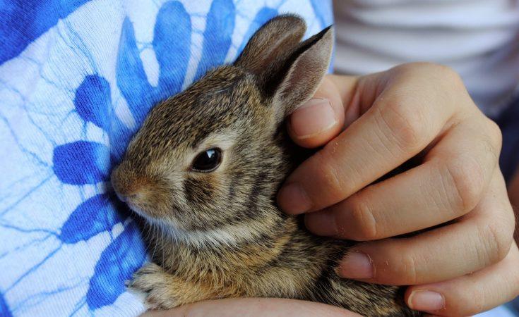 Best Pet Rabbit For Child Safe Pets For Kids Under 12