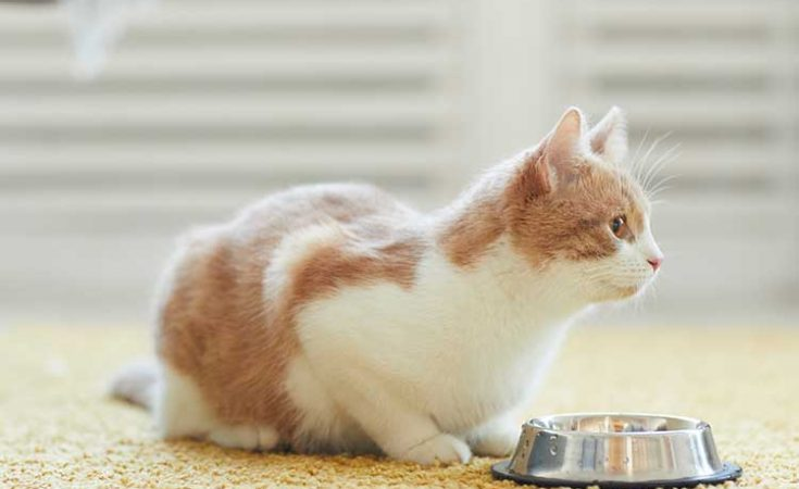 Best Canned Cat Food For Senior Cats